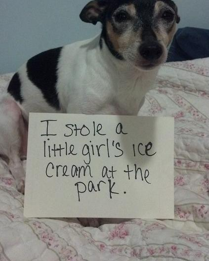 Dog Shaming Meme